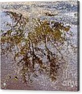 A Monet Moment IIi Acrylic Print