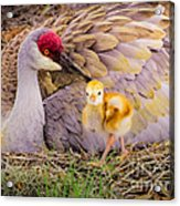 A Mother's Lovely Touch Acrylic Print