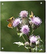 A Moth's Feast Acrylic Print
