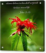 A Mountain Flower  John 3 16 Acrylic Print