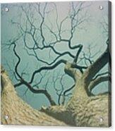 A Naked Tree Acrylic Print