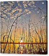 A New Day Begins ... Acrylic Print
