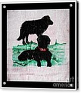 A Newfoundland Dog And A Labrador Retriever Acrylic Print