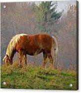 A November Horse Acrylic Print
