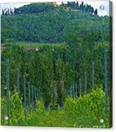 A Painting A Tuscan Vineyard And Villa Acrylic Print