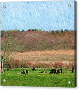 A Painting Cows Grazing And Newport Bridge Acrylic Print