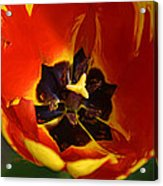 A Painting Red Tulip Acrylic Print