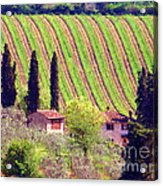 A Painting Tuscan Vineyard Acrylic Print