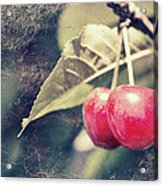 A Pair Of Cherries Acrylic Print