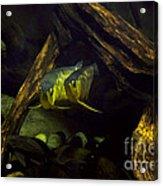 A Pair Of Fish Acrylic Print