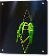 A Pair Of One Dancer.... Acrylic Print