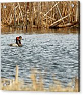A Pair Of Redheads 2 Acrylic Print