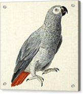 A Parrot Acrylic Print