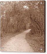 A Path In Life Acrylic Print
