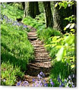 A Path Through An English Bluebell Wood In Early Spring Acrylic Print