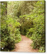 A Path To The Redwoods Acrylic Print