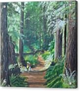 A Peaceful Walk In The Redwoods Acrylic Print