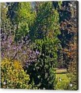A Peek Through The Trees Acrylic Print