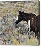 A Penny For Your Thoughts Acrylic Print
