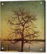 A Pictorialist Photograph Of A Lone Acrylic Print by Roberta Murray