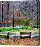A Place Of Peace Among The Daffodils Acrylic Print