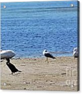 A Place To Rest Acrylic Print