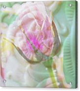 A Porcelain Rose Acrylic Print