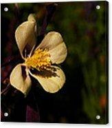 A Pretty Flower In The Sun Acrylic Print