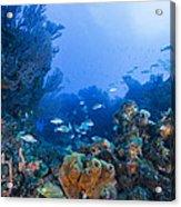 A Quiet Underwater Day Acrylic Print