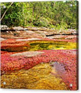 A Red And Yellow River In Colombia Acrylic Print