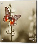 A Red Butterfly On The Moody Field Acrylic Print