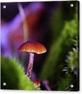 A Red Mushroom  Acrylic Print