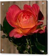 A Red Rosr Against A Weathered  Wood Background Acrylic Print