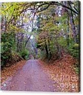 A Road In Autumn. Acrylic Print