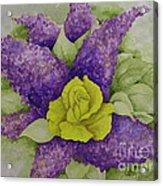 A Rose Among The Lilacs Acrylic Print
