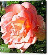 A Rose And A Rose Acrylic Print