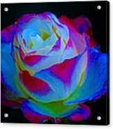 A Rose Enhanced Acrylic Print