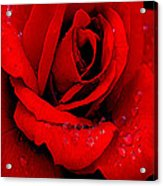 A Rose For A Sweetheart Acrylic Print