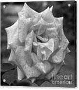 A Rose In Black And White Acrylic Print