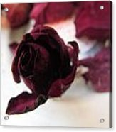 A Rosey View Acrylic Print