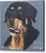 A Rottie Named Thor Acrylic Print