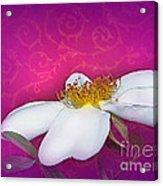 A Royal Rose Acrylic Print