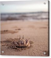 A Sand Crab Looks Out Over The Andaman Acrylic Print