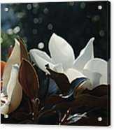 A Sea Of Magnolias Acrylic Print