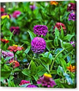 A Sea Of Zinnias 14 Acrylic Print