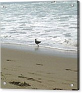 A Seagull Playing With Waves Acrylic Print by Hiroko Sakai