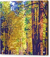 A Shady Drive Through Yosemite Acrylic Print