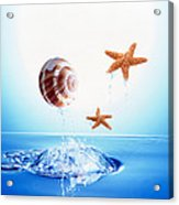 A Shell And Two Starfish Floating Acrylic Print