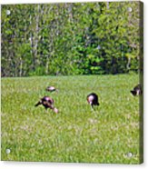 A Shot Of Wild Turkey Acrylic Print