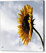 A Side Of Sunflower Acrylic Print